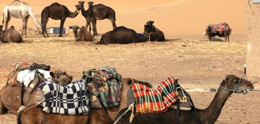 Mhamid meilleur endroit touristique à visiter au Maroc